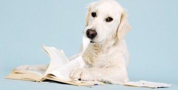 Dog eating assignments - offshore writings - Motivational article